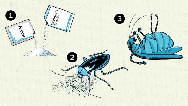 Como_matar_insetos2