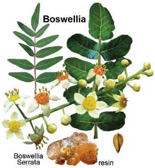 boswelli-serrata