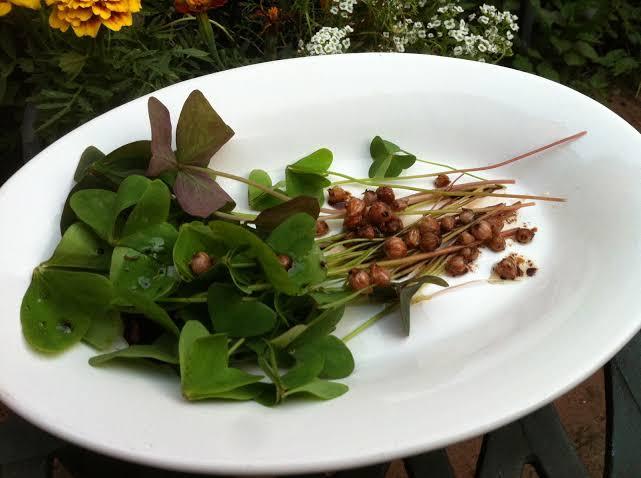 Não é matinho! Conheça algumas Plantas Alimentícias Não Convencionais (PANCs) que você encontra por Jaraguá