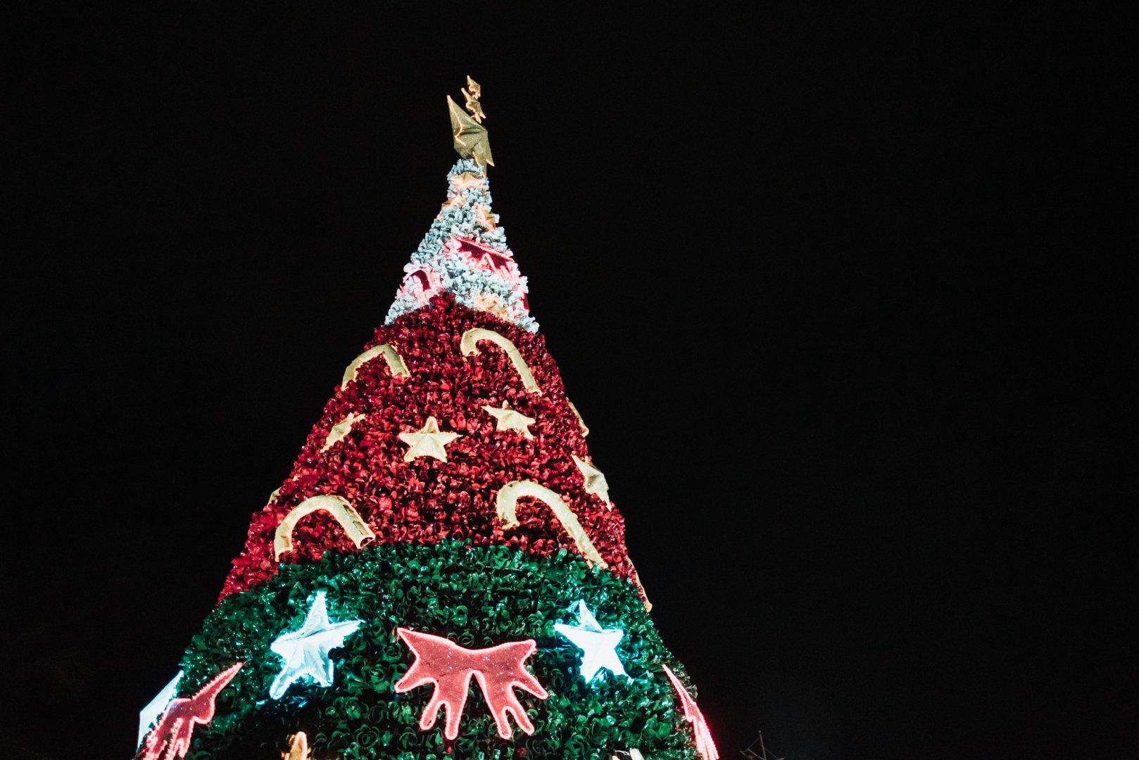 Com 16,40 metros de altura, a árvore superou os 15,20 metros do ano passado   Foto Divulgação
