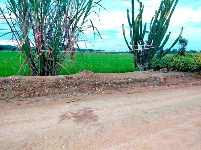 Taxista encontrado morto em arrozal foi morto com 42 facadas | Foto Fábio Junkes/OCP News