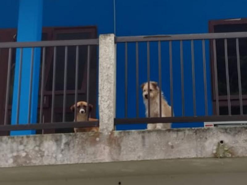 Animais ficaram cerca de 15 dias abandonados | Divulgação Polícia Civil