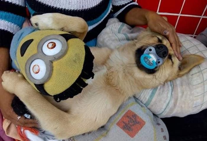 Cachorro ganhou uma caminha improvisada   Foto Renata Macedo de Jesus