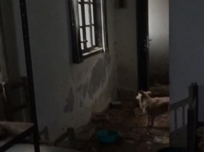 Foto: Divulgação/Departamento de Assistência e Bem Estar Animal