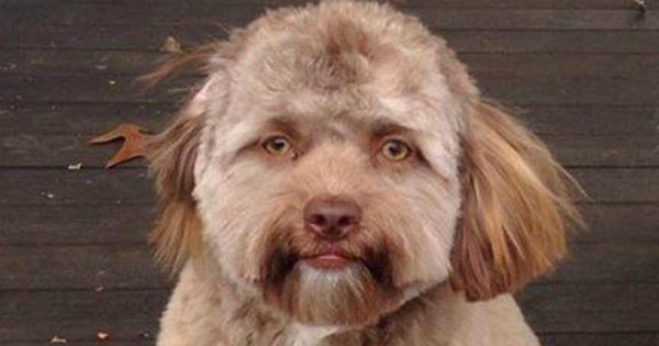 Cachorrinho com cara de gente bomba na internet