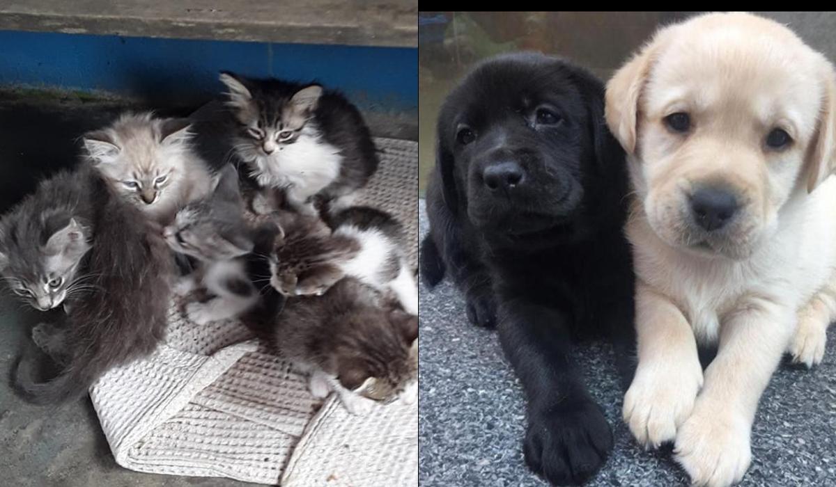 Ninhada de gatos e dois cães