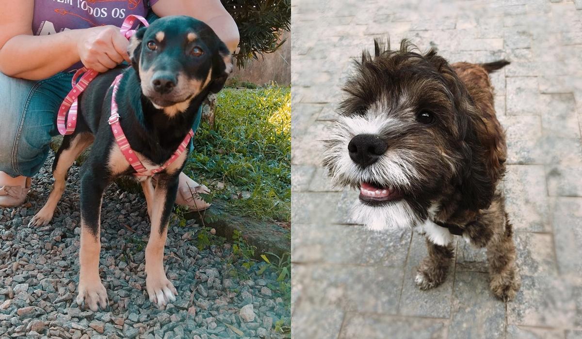 Cão preto e marrom e cão preto peludo com manchas brancas