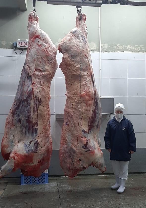 VÍDEO: Boi gigante abatido no frigorífico São João bate recorde de peso